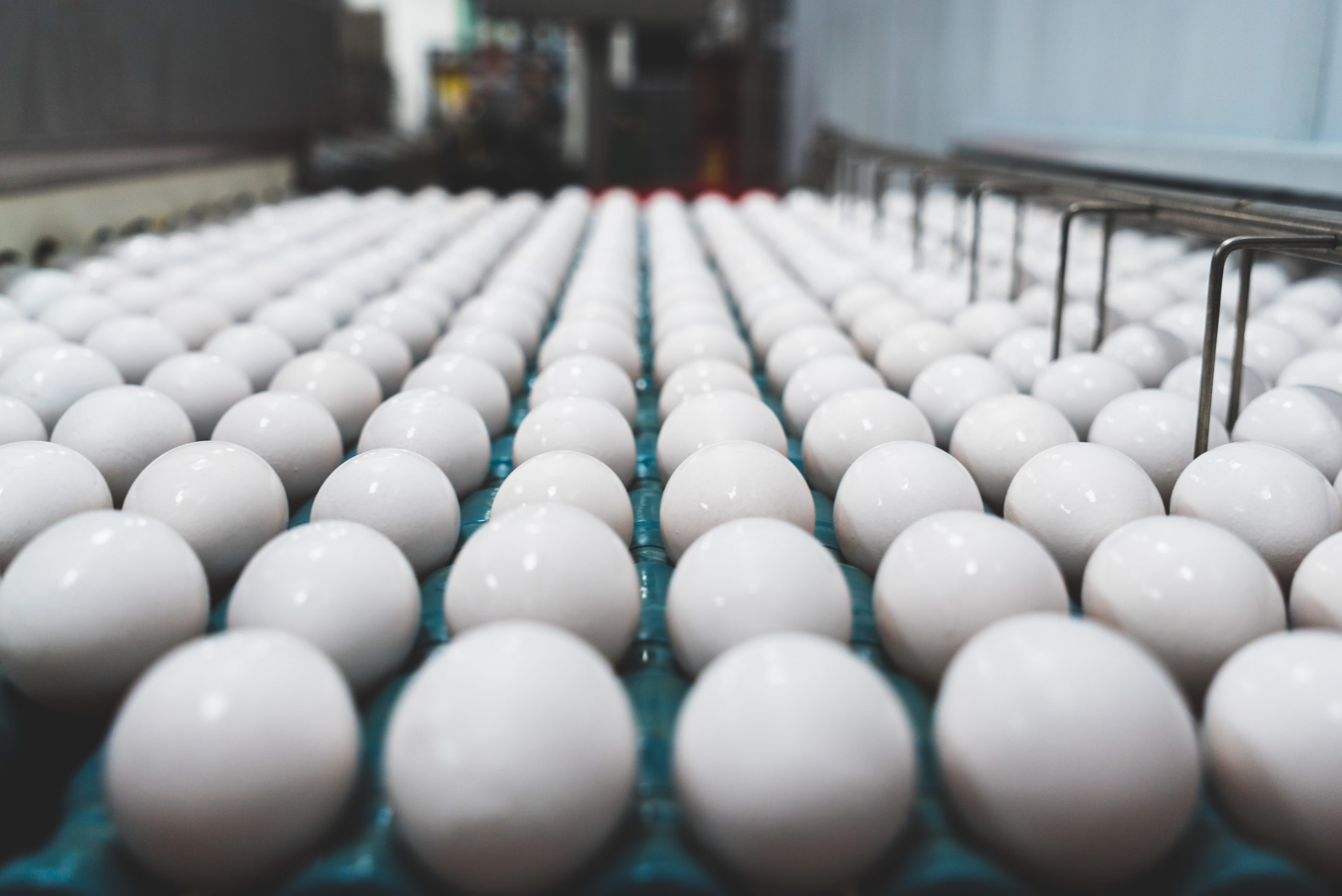 Employee care and a safe environment are top priorities on egg farms